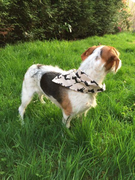 zumeline et vous bandana chiens
