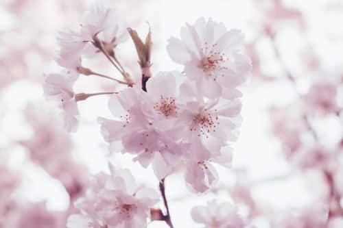 confinement-printemps-zumeline
